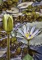 Detalhes do Botânico.jpg