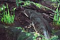 Diorama of a Permian forest floor - Eryops (45651934102).jpg