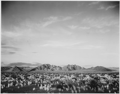 "Distant view of mountains, desert, shrubs highlighted in foreground, ""Near Death Valley National Monument,"" California., - NARA - 519855.tif"