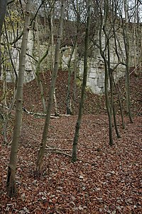 Disused quarry, Birdlip Hill - geograph.org.uk - 622149.jpg