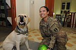 Dog and handler help relieve battle stress for deployed soldiers DVIDS475619.jpg