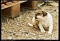 Dogs (5080844445).jpg