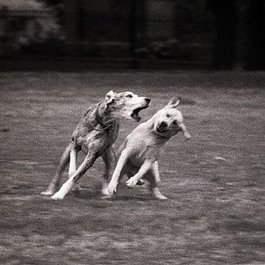 Dogs in Grange Park, Toronto, Canada.