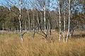 Dosenmoor im Herbst 2.jpg