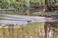 Dourdou River near Nauviale 06.jpg