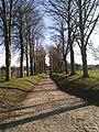 Drève de tilleuls du château de Beaulieu (Lathuy).jpg