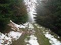 Drum forestier pe muntele Vânăta - panoramio.jpg