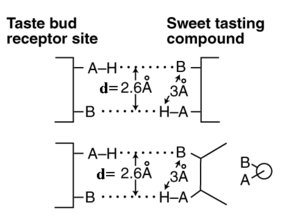 Muco-Inositol - Dual Coordinate Bond Arrangement used in gustation and olfaction. The upper frame shows the general concept.  The lower box shows the actual ligand of the gustaphore used to select the sweet or G-path of the neural system.  The caricature on the right shows the Newman Diagram for this ligand.