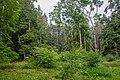 Dubrava Ščomyslickaja natural monument (Belarus) p21.jpg