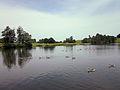 Ducks on Petworth Park lake.jpg