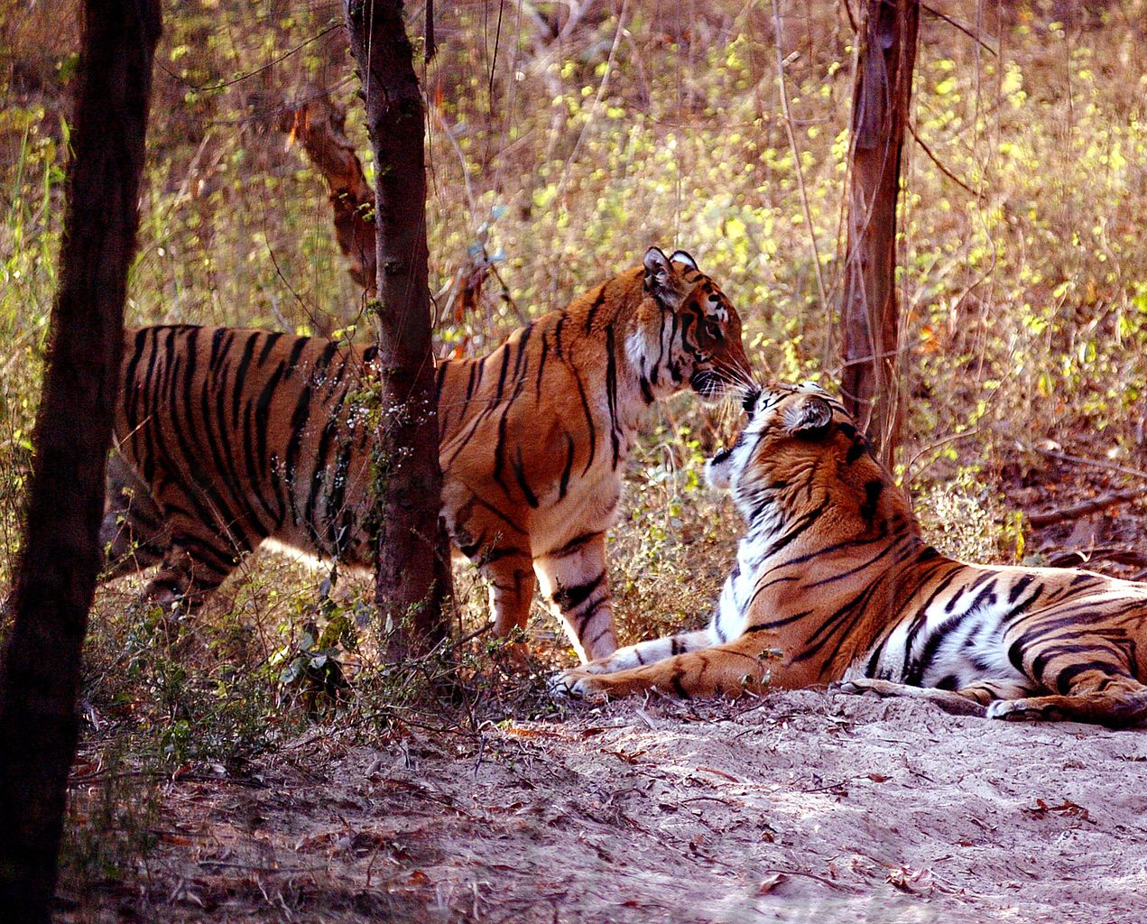 Dudhwa | List of National Parks. In India