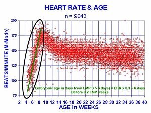 At 21 days after conception, the human heart begins beating at 70 to 80  beats per minute and accelerates linearly for the first month of beating.