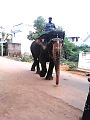 ELEPHANT IN TAMILNADU.jpg