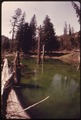 ENTROPHICATION IN SATSOP LAKE IN OLYMPIC NATIONAL TIMBERLAND, WASHINGTON. THE ALGAE IN THE WATER IS CAUSED BY... - NARA - 555229.tif
