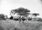 ETH-BIB-Zwei Männer im Camp Serengeti-Kilimanjaroflug 1929-30-LBS MH02-07-0477.tif