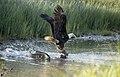 Eagle Fish Plus 841.jpg