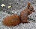 Eichhörnchen auf Beton.jpg