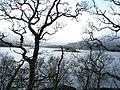 Eilean a Chuilinn in Loch Sunart - geograph.org.uk - 412639.jpg