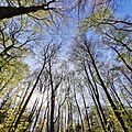 Ein Wald im Holtenser Berg.jpg