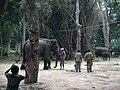 Elephant from Bannerghatta National Park 8689.JPG