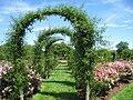 Elizabeth Park, Hartford, CT - rose garden 7.jpg