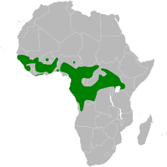 Elminia longicauda distribution map.png