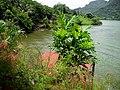 Embalse Dos Bocas de Utuado - panoramio.jpg