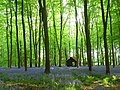 Embley Wood - geograph.org.uk - 800663.jpg