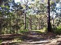 Engadine NSW 2233, Australia - panoramio (155).jpg