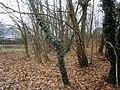 Entenschnabel - Grundstück9Spitze.jpg