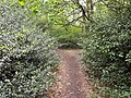Epping Forest 20170727 112820 (49374162308).jpg