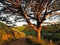 Estrada terra capivari itamonte - panoramio.jpg