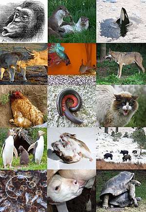 Ethology - A range of animal behaviours