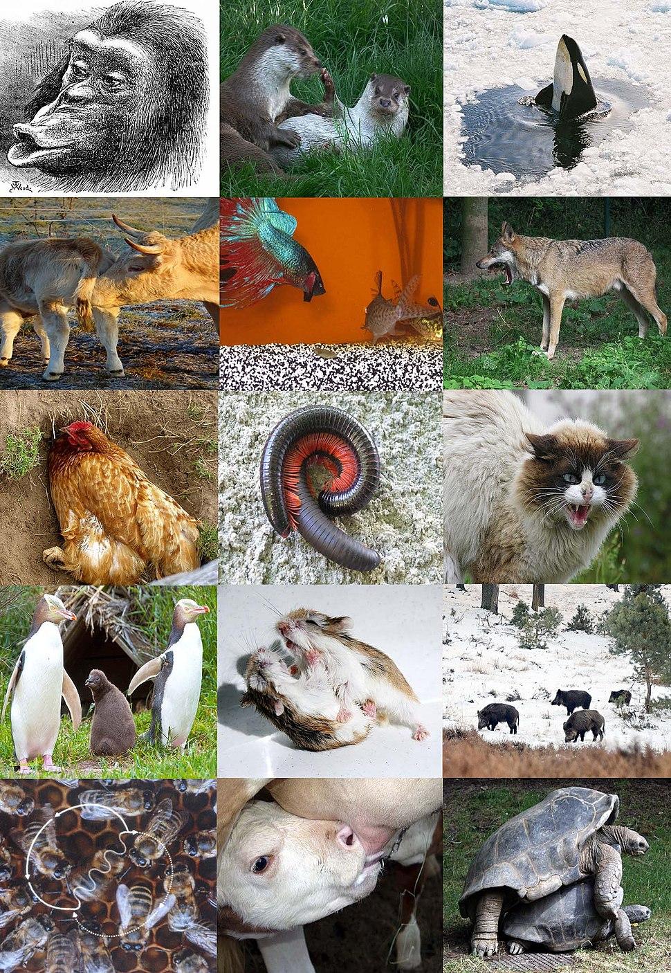 Ethology diversity 2