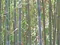 Fale - Giardini Botanici Hanbury in Ventimiglia - 682.jpg