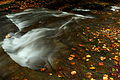 Fall-foliage-creek-leaves-stream - West Virginia - ForestWander.jpg