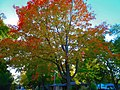 Fall Foliage in Madison - panoramio (17).jpg