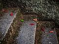 Fallen leaves 2875236.jpg
