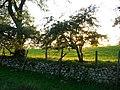 Farmland near Milburn - geograph.org.uk - 258871.jpg