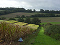 Farmland near Warren Farm - geograph.org.uk - 265586.jpg