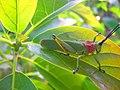 Faune à Bamougong.jpg