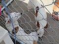 Fence Factory Ventura Store - panoramio (3).jpg