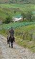 Fioletovo - Armenia (2926153035).jpg