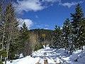 First Snow in Bergen Park - panoramio (2).jpg