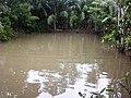 Fishing from Pond (Karpara) - panoramio.jpg