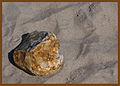 Flickr - Laenulfean - lonely stone.jpg