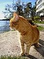 Flickr - Per Ola Wiberg ~ mostly away - The old gentleman again.jpg