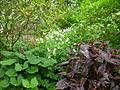 Flickr - brewbooks - Our Garden - May, 2008.jpg