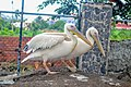 Flock of Birds3.jpg