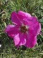 Flower-Dortmund 6.jpg